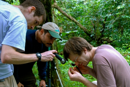 Looking at juvenile Anolis barbouri with Liam Revell and José Luis Herrera - Polo, Dominican Republic (photo by Bryan Falk)