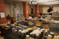 Working in the Herpetology collections, Museum of Comparative Zoology at Harvard (photo by Melissa Aja)